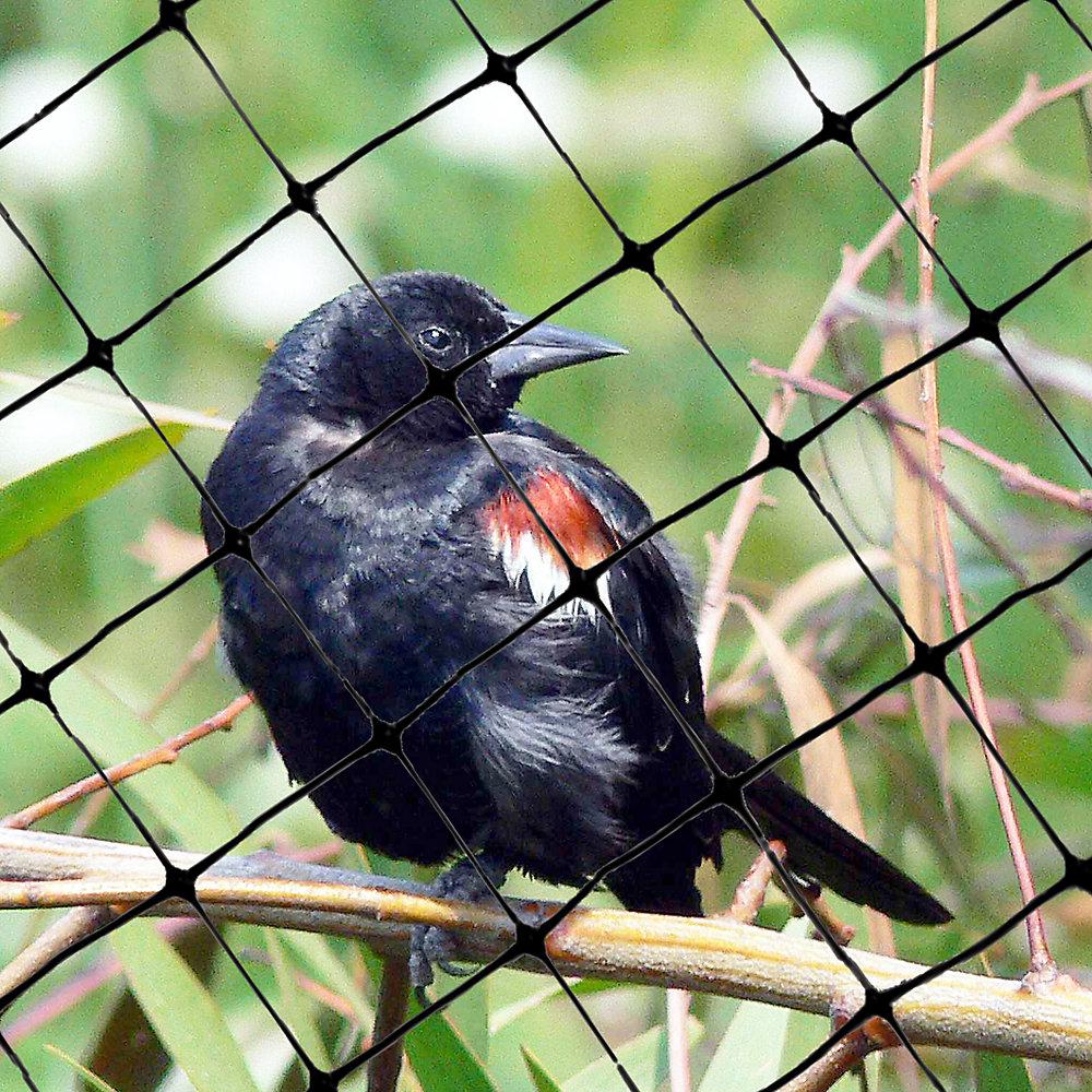 Standard Bird Netting 100 Feet X 14 Feet Lightweight Bird Control 3/4
