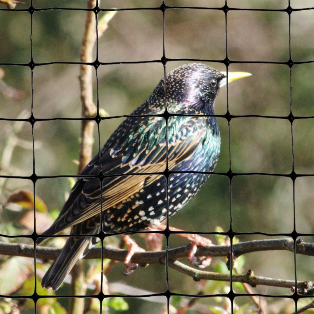 Filet attrape-oiseaux standard 200 ft. x 14 ft. Bird-X