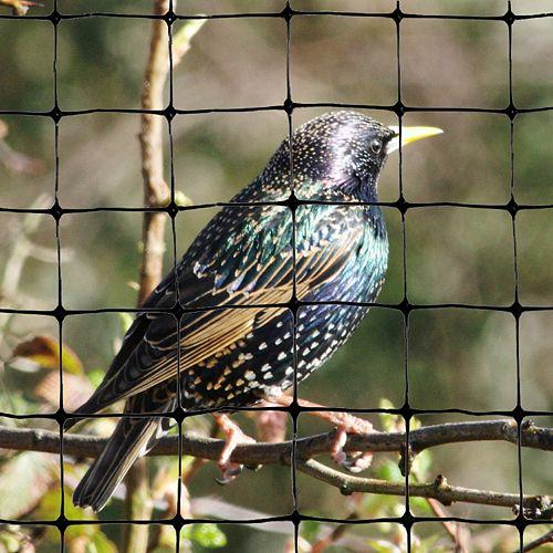 """Bird-X Inc. Standard Bird Netting 200 Feet X 14 Feet  Lightweight Bird Control 3/4"""" Molded Mesh #1 Best Seller"""