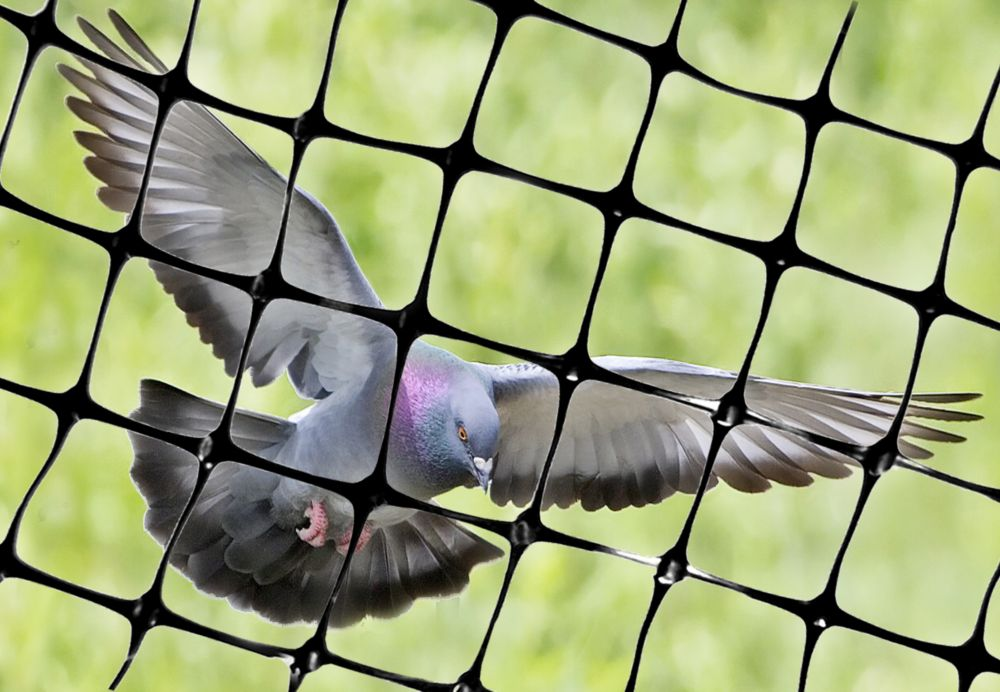 """Structural Bird Netting 100 Feet X 14 Feet Lightweight Bird Control 1/2"""" Molded Mesh #1 Best Seller"""