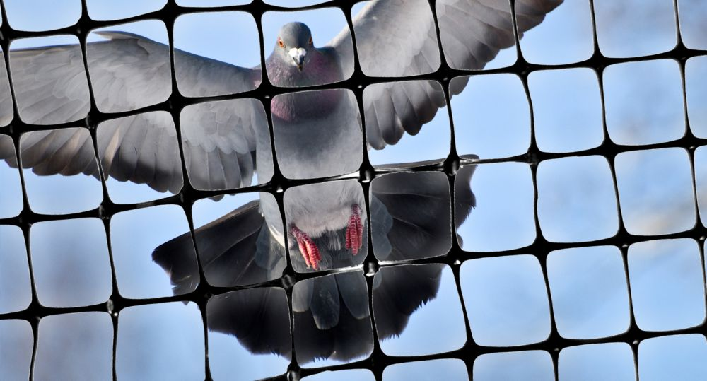 """Bird-X Inc. Structural Bird Netting 200 Feet X 14 Feet Lightweight Bird Control 1/2"""" Molded Mesh #1 Best Seller"""