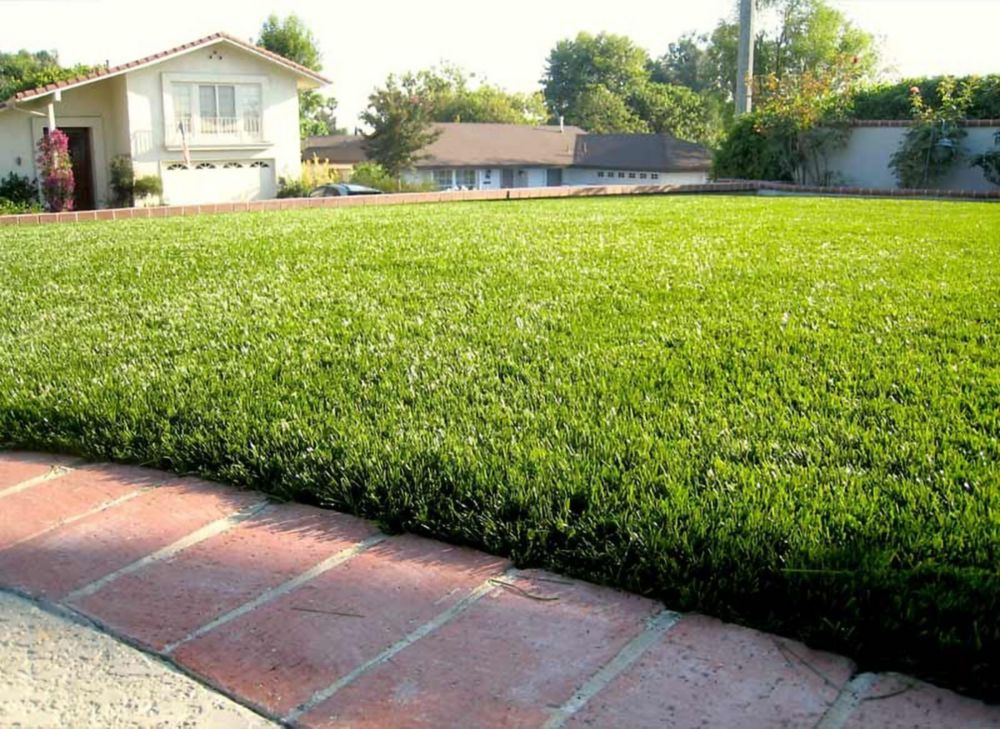 GREENLINE JADE 50 - Artificial Synthetic Lawn Turf Grass Carpet for Outdoor Landscape - 5 Feet x ...