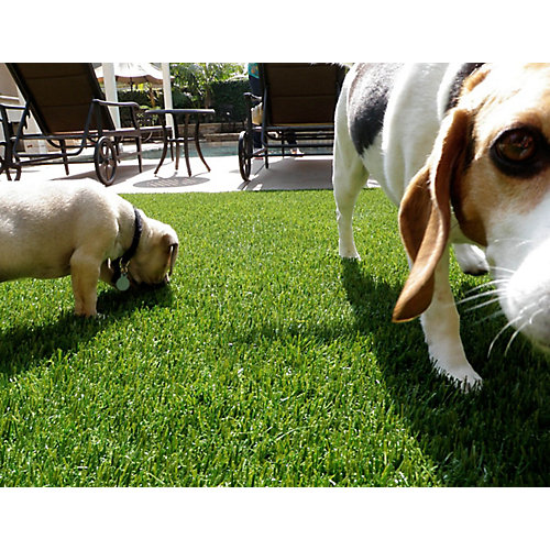 Pet or Sport 60 15 ft. x 25 ft. Artificial Grass for Outdoor Landscape