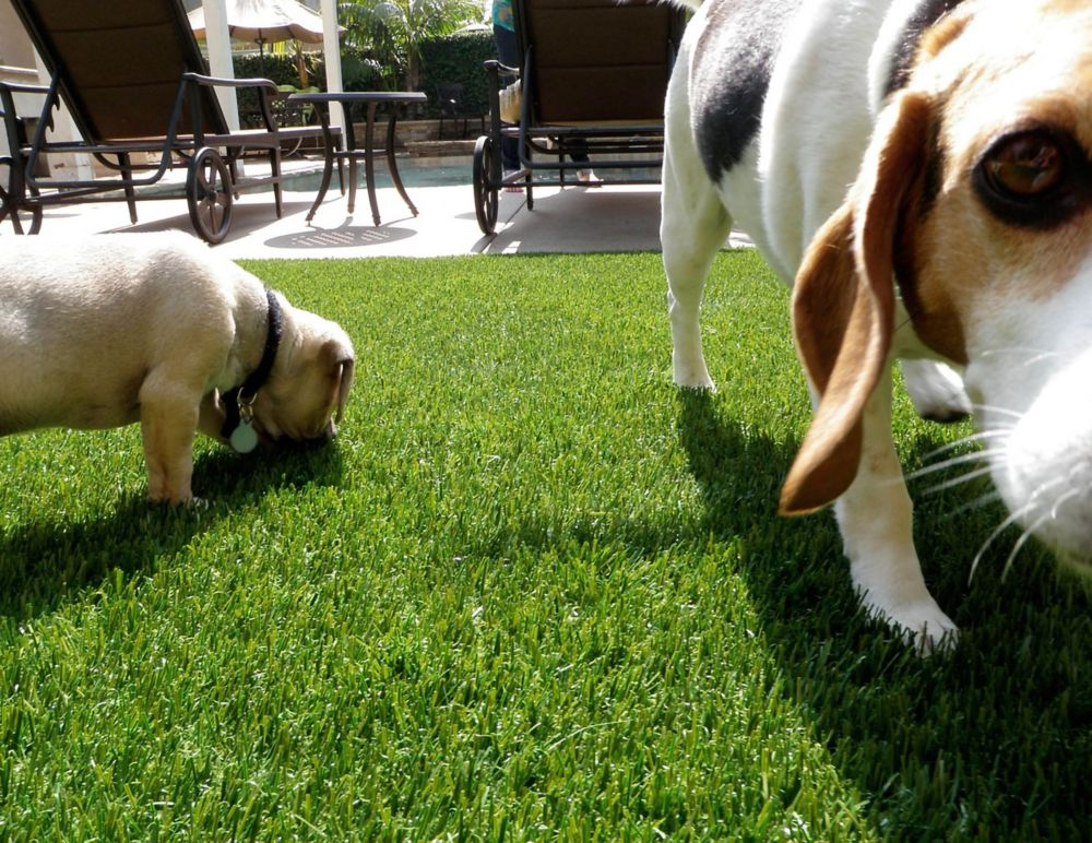 GREENLINE PET/SPORT 60 - Artificial Synthetic Lawn Turf Grass Carpet for Outdoor Landscape - 7.5 ...