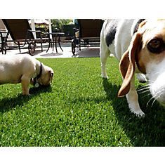 Pet or Sport 60 3 ft. x 8 ft. Artificial Grass for Outdoor Landscape