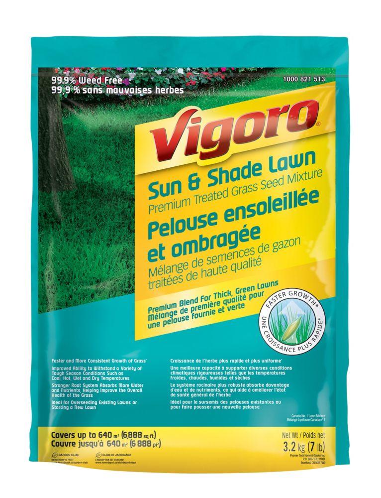 Mélange de semences de gazon traitées de haute qualité pour pelouse ensoleillée et ombragée Vigor...