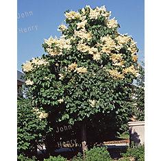 Lilas Japonais Ivory Silk 7 g