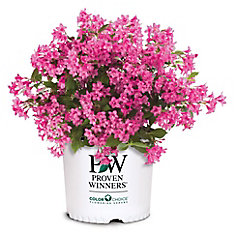 PW Weigela Sonic Bloom Pink