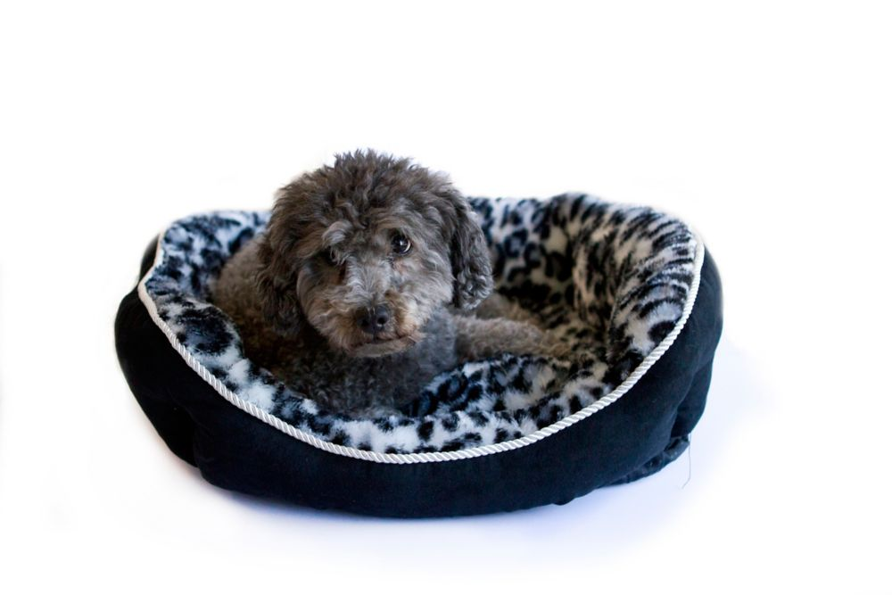 Diane Faux Suede Pet Bed With Fleece Interieur Cheetah Print : Black 23 Inch  X 18 Inch  X 7 Inch