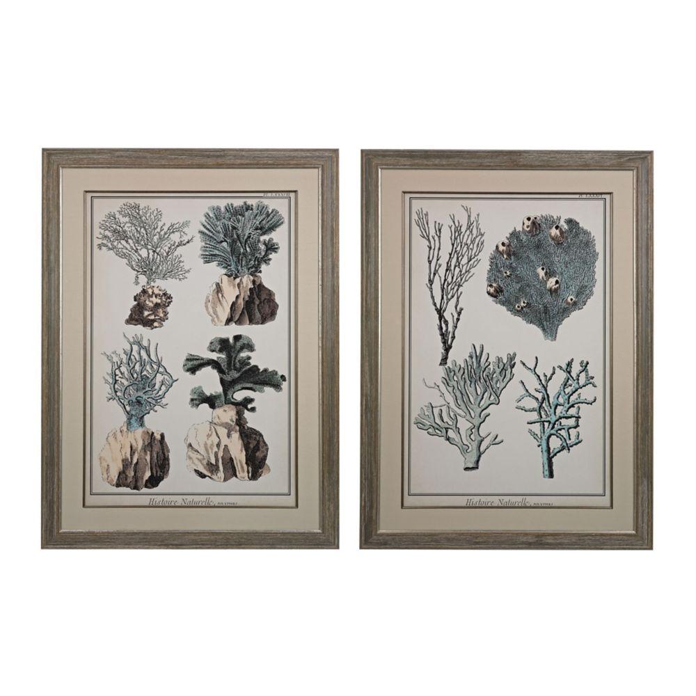 Oversized Coral Species I, II - Fine Art Giclee Under Glass