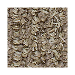 Beaulieu Canada Dunkirk - Gaucho Brown Carpet - Per Sq. Feet