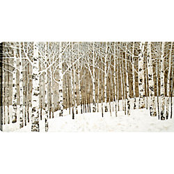"Art Maison Canada 30"" H x 60"" W Hand Panted, 'Birch Tree Oil' by Tina O. Wall Art on Wrapped Canvas"