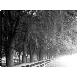 Art Maison Canada Covered by Trees' Photographic Print on Wrapped Canvas