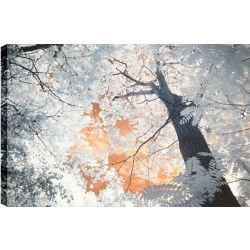 Art Maison Canada Trees II' Photographic Print on Wrapped Canvas