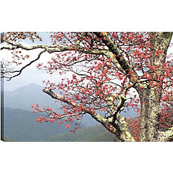 Art Maison Canada Trees of the Hills'  Photographic Print on Wrapped Canvas