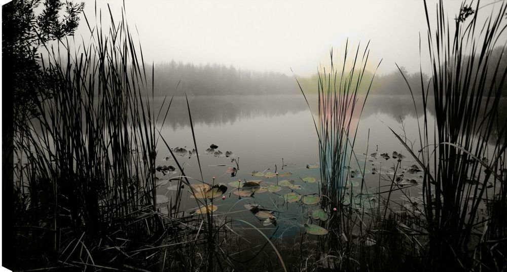 Art Maison Canada Bushes in the Lake' Photographic Print on Wrapped Canvas