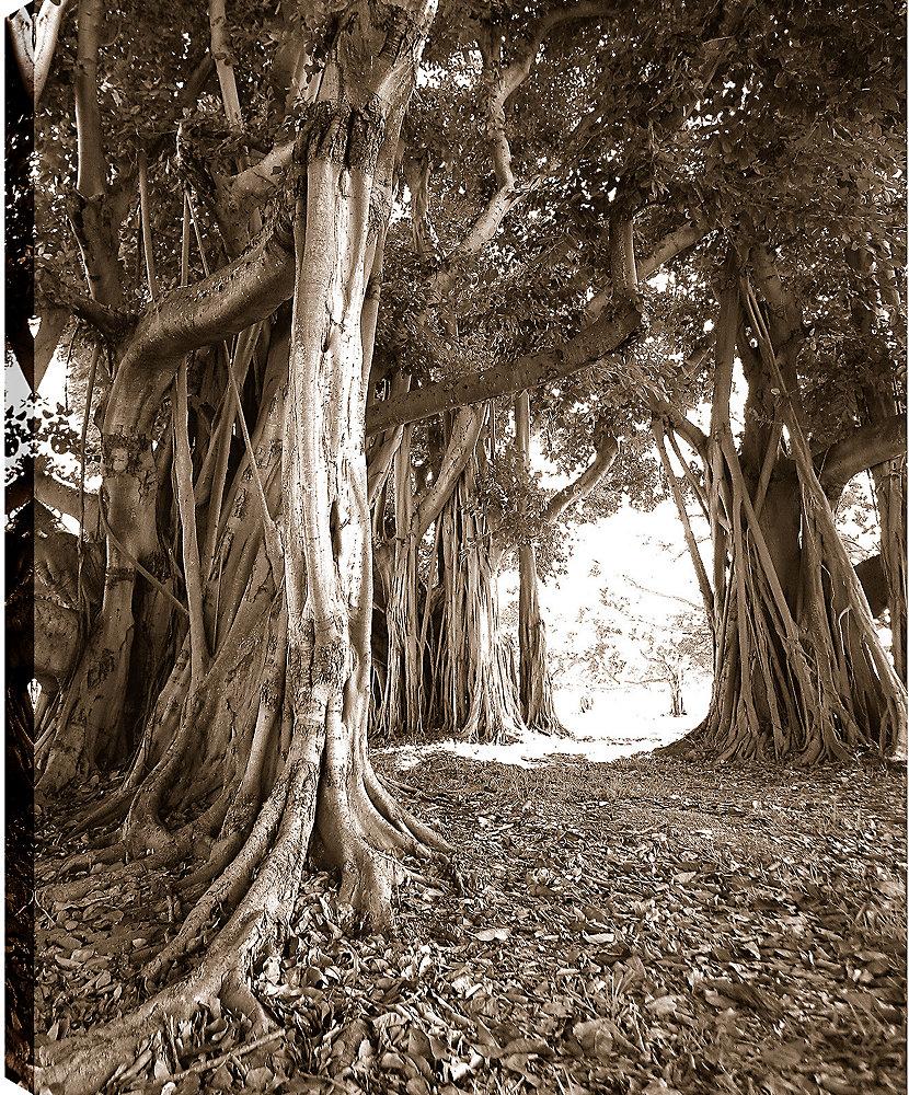 Parcours dans tirage photographique des Branches sur toile enveloppé
