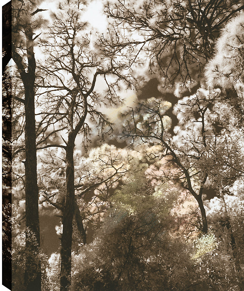 Cotton Trees' Photographic Print on Wrapped Canvas