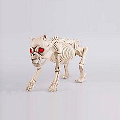 Squelette de bouledogue