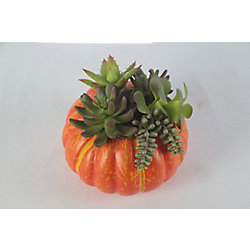 HAR 7-inch Pumpkin and Succulents Harvest or Halloween Decoration