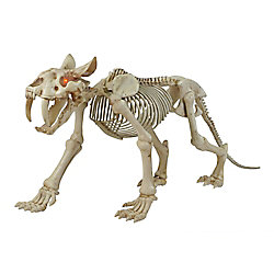 Home Accents Halloween 72-inch Long LED-Lit Skeleton Sabretooth Tiger Halloween Decoration