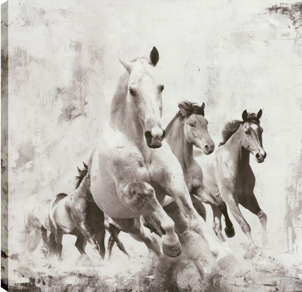 Art Maison Canada Black Beauty II, Animal Art, Canvas Print Wall Art