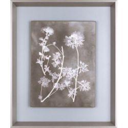 Art Maison Canada Herbier étude IV, Art Floral, impression sur papier de