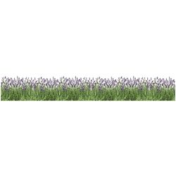 Home Decor Line Lavender Border Decal