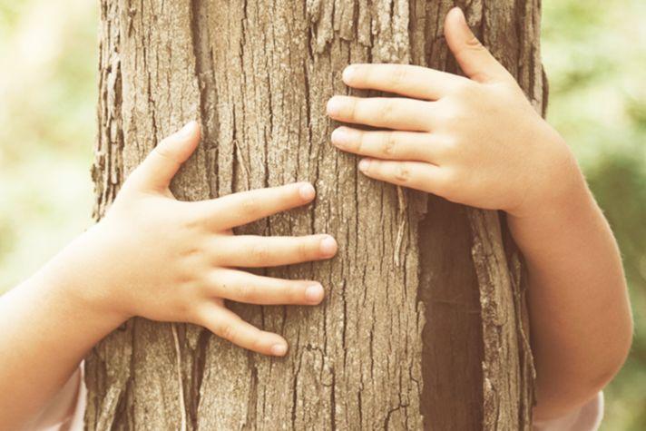 hon-tree-banner-jpg.jpg