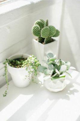 blog-cactus