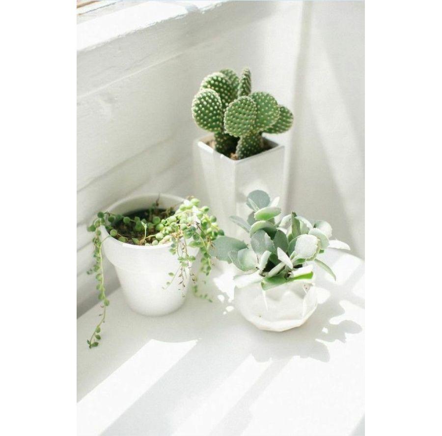 Des pots de fleurs blancs avec des plantes vertes près d'une fenêtre de la salle de bains