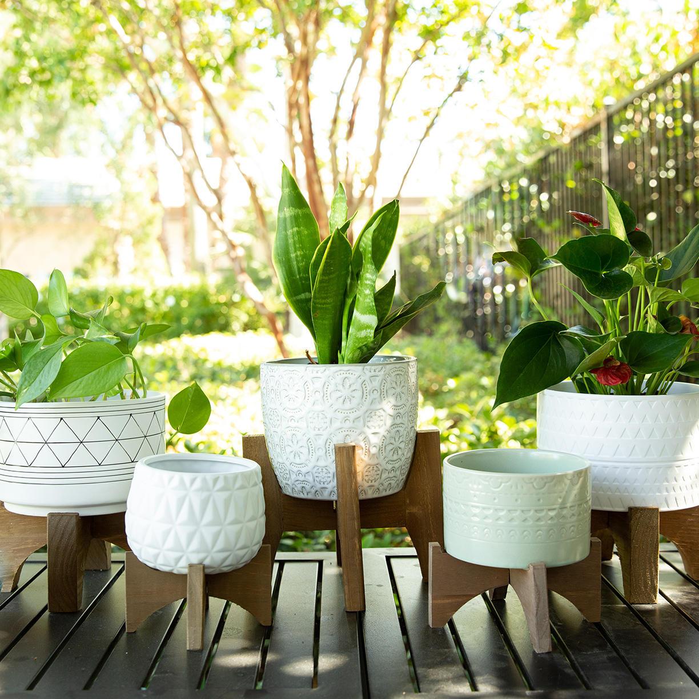 Plant Accessories & More Home Decor