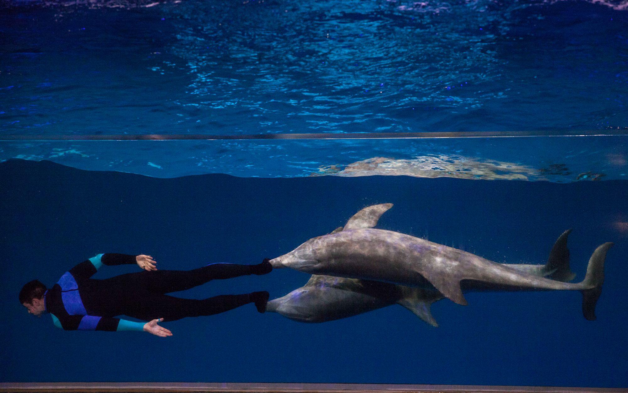 Georgia Aquarium The Ritz Carlton
