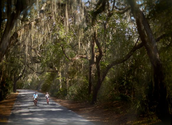 Two people biking down a road shaded by large trees