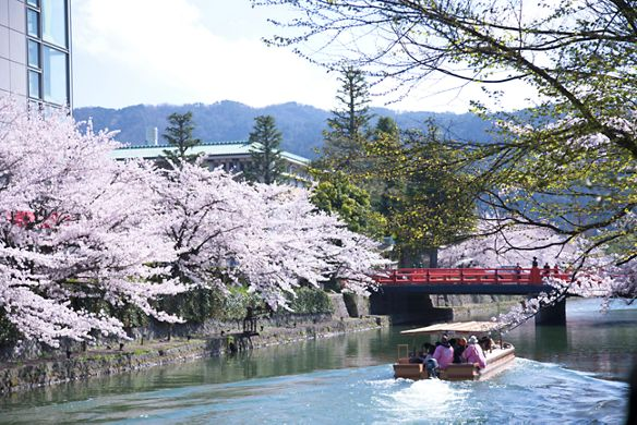 Trees laden with pale pink cherry blossoms hang over the river while a traditional boat sails along