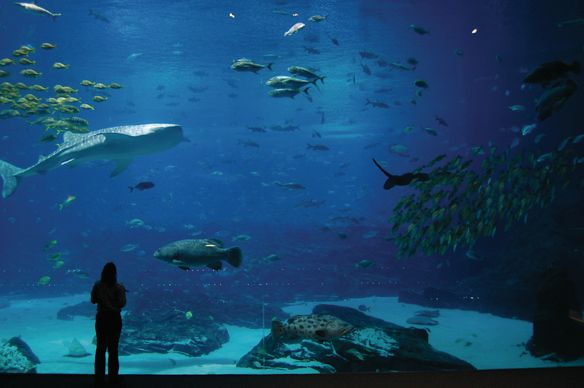 A silhouette of a person in front of a large tank of sharks and fish