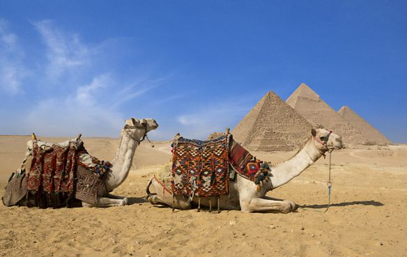 Two camels sitting in the sand with three pyramids in the background