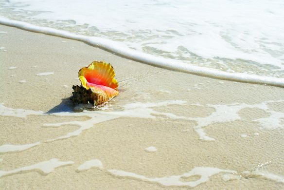A seashell on the beach