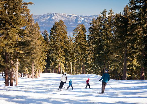 Skiers go down a slope surrounded by pine trees