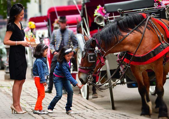 children feeding horse