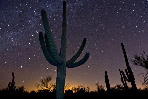 Saguaro cactus and stars near Tucson, Arizona.