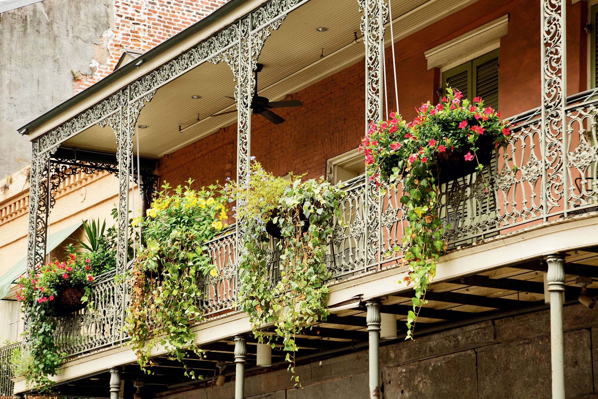 Leaves from flowering plants hang down from a balcony