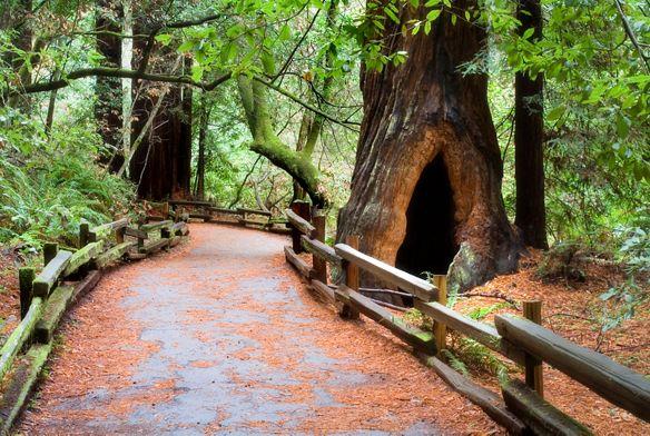 Muir Woods National Park near San Francisco, California