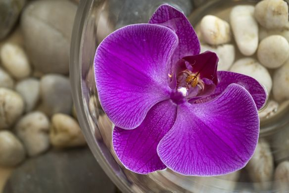 An orchid sits atop a pile of river rocks