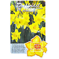 Daffodil Yellow Trumpet Bulbs, 50 Ct