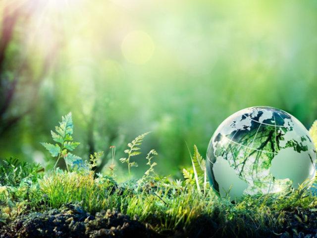 grass with globe