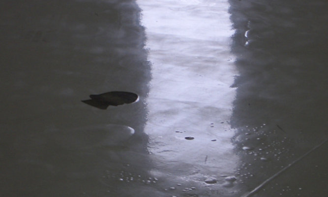 moisture bubble or blister on a resinous floor
