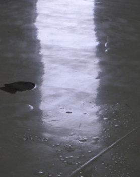 moisture bubbles on resin floor