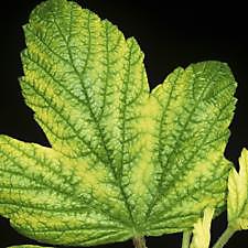Cures For Plant Nutrient Deficiencies