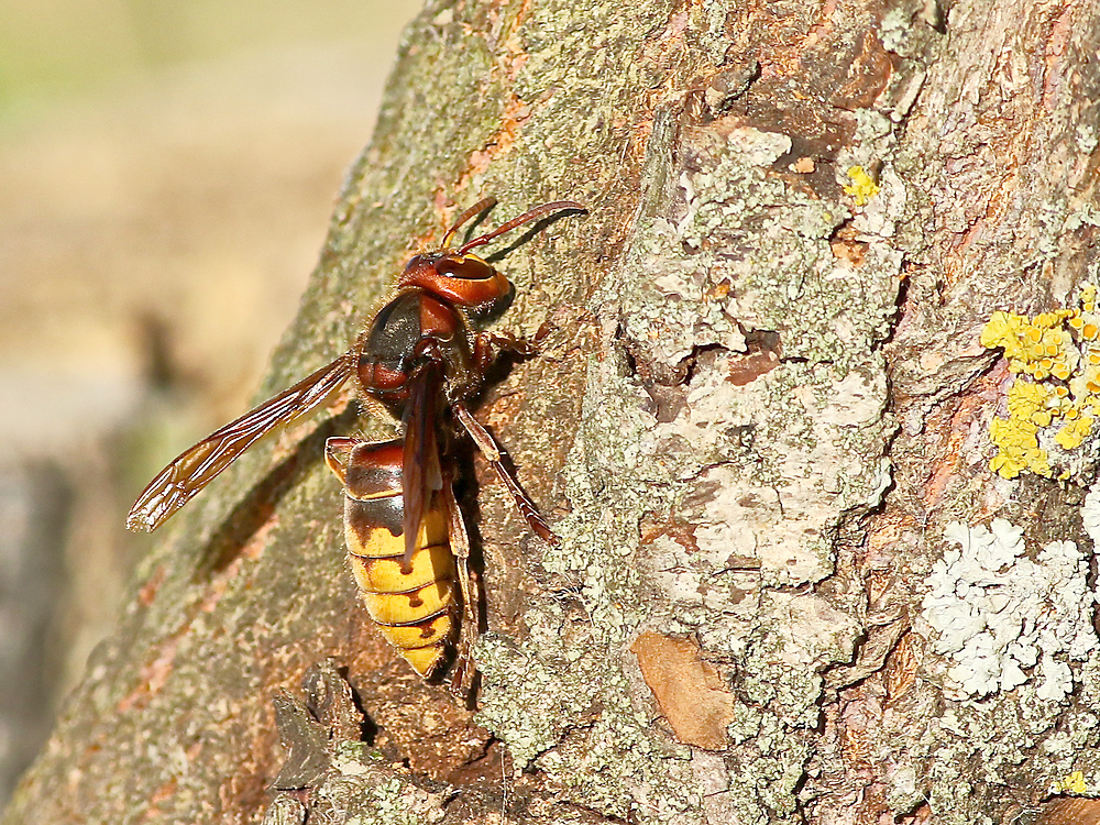 wasp on tree